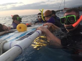 Swimming with mantas, Kona, Hawaii